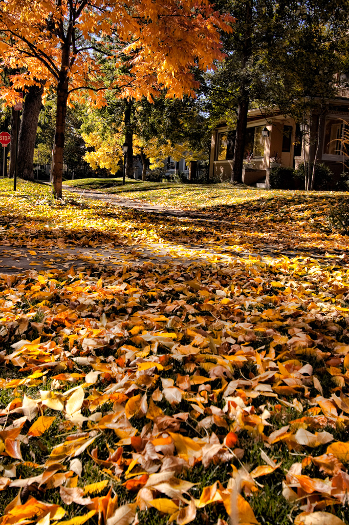 Denver's Country Club Neighborhood with leaves on the sidewalk