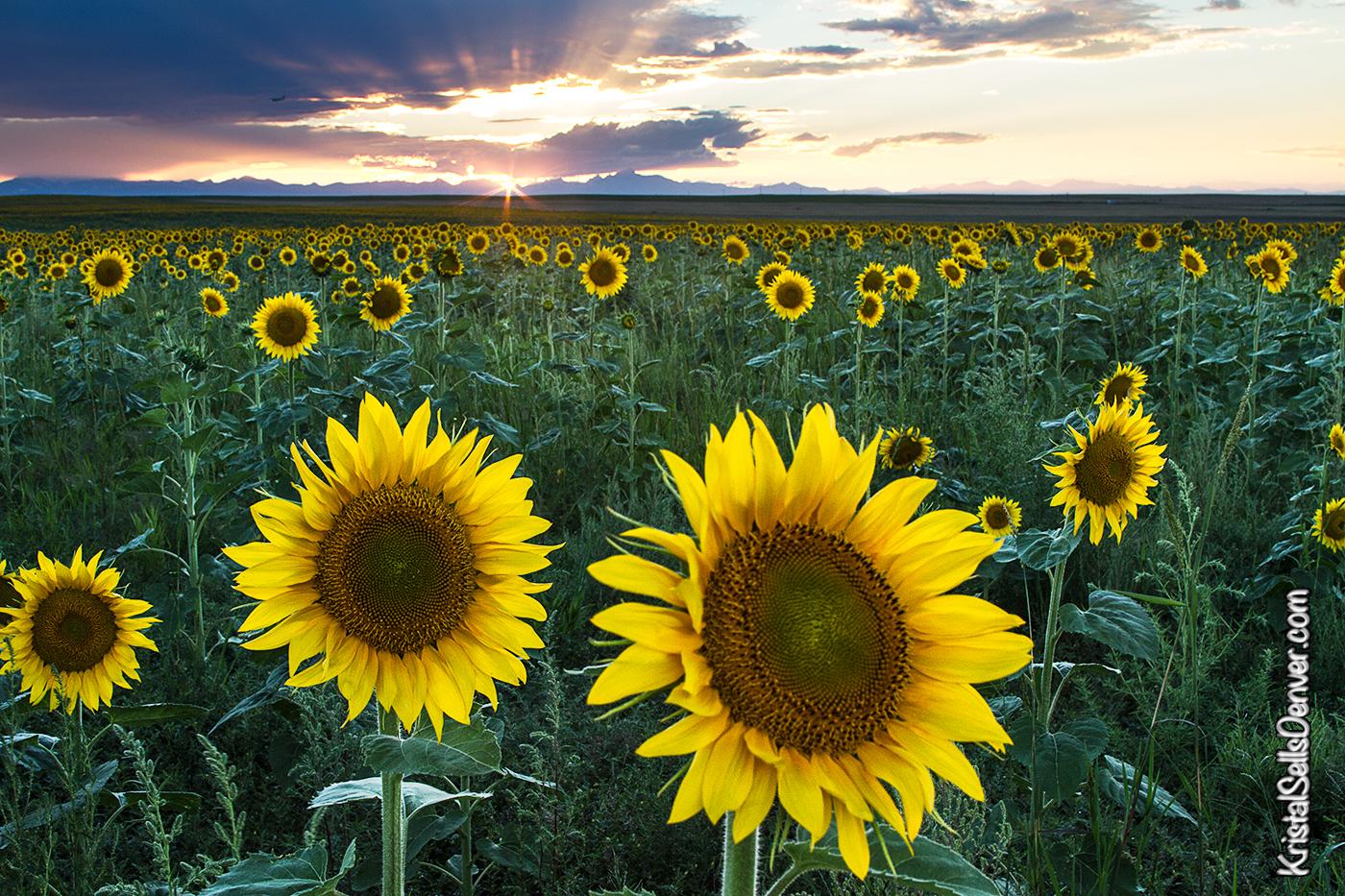 SunflowerEve-KristalKraft
