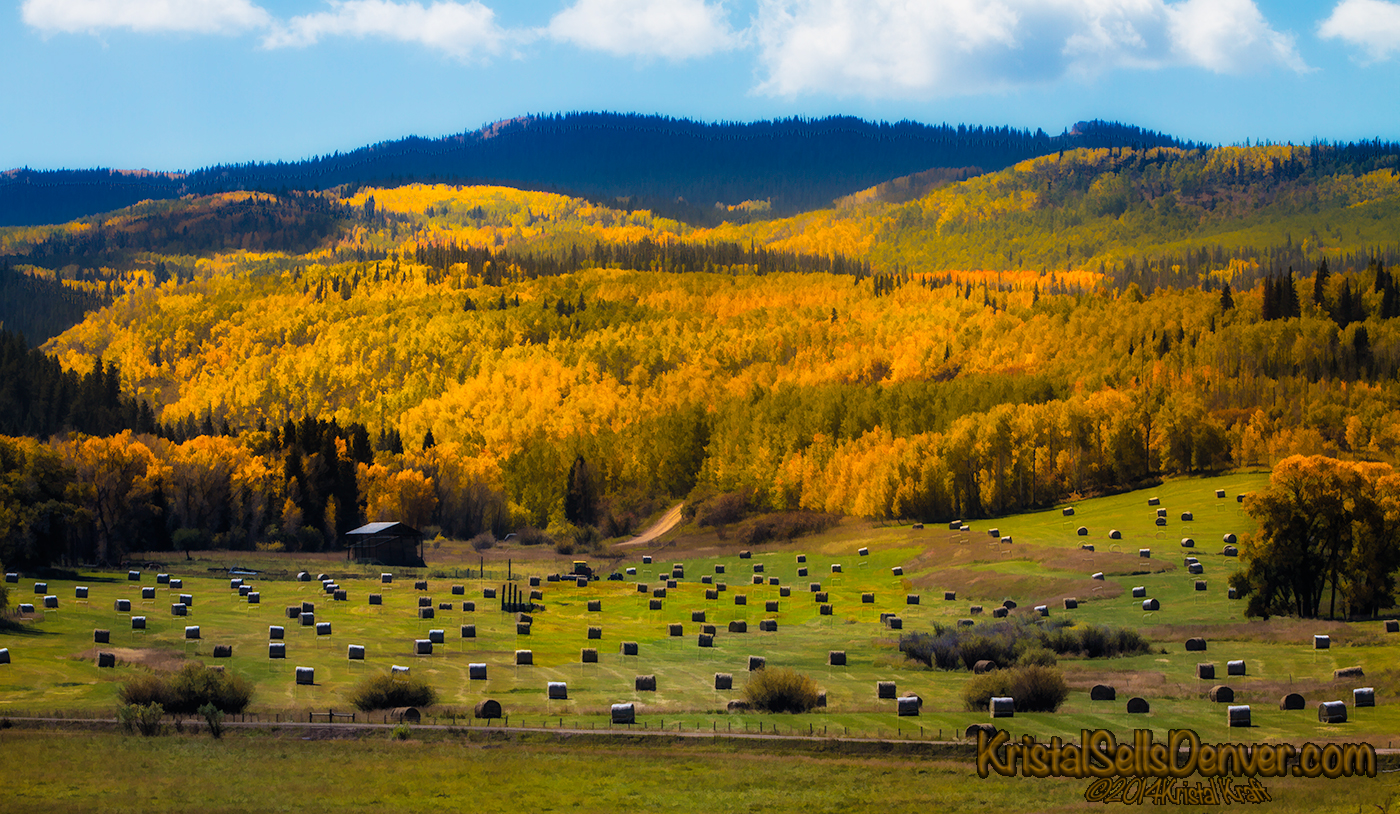 Hay bales in fall with the Aspens Trees turning golden