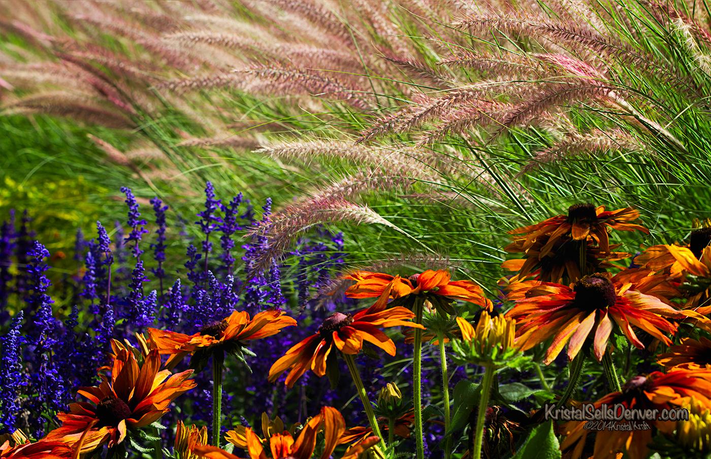 Flowers growing in a summer garden in Denver, Colorado