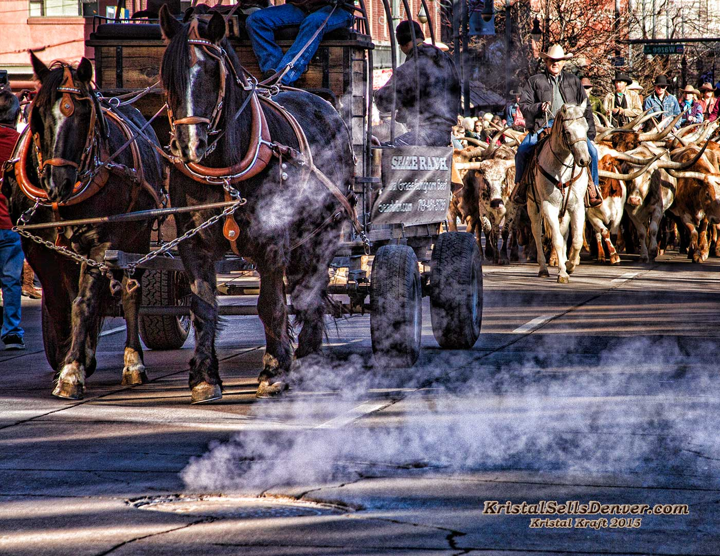 Horses and steers parade in downtown Denver,