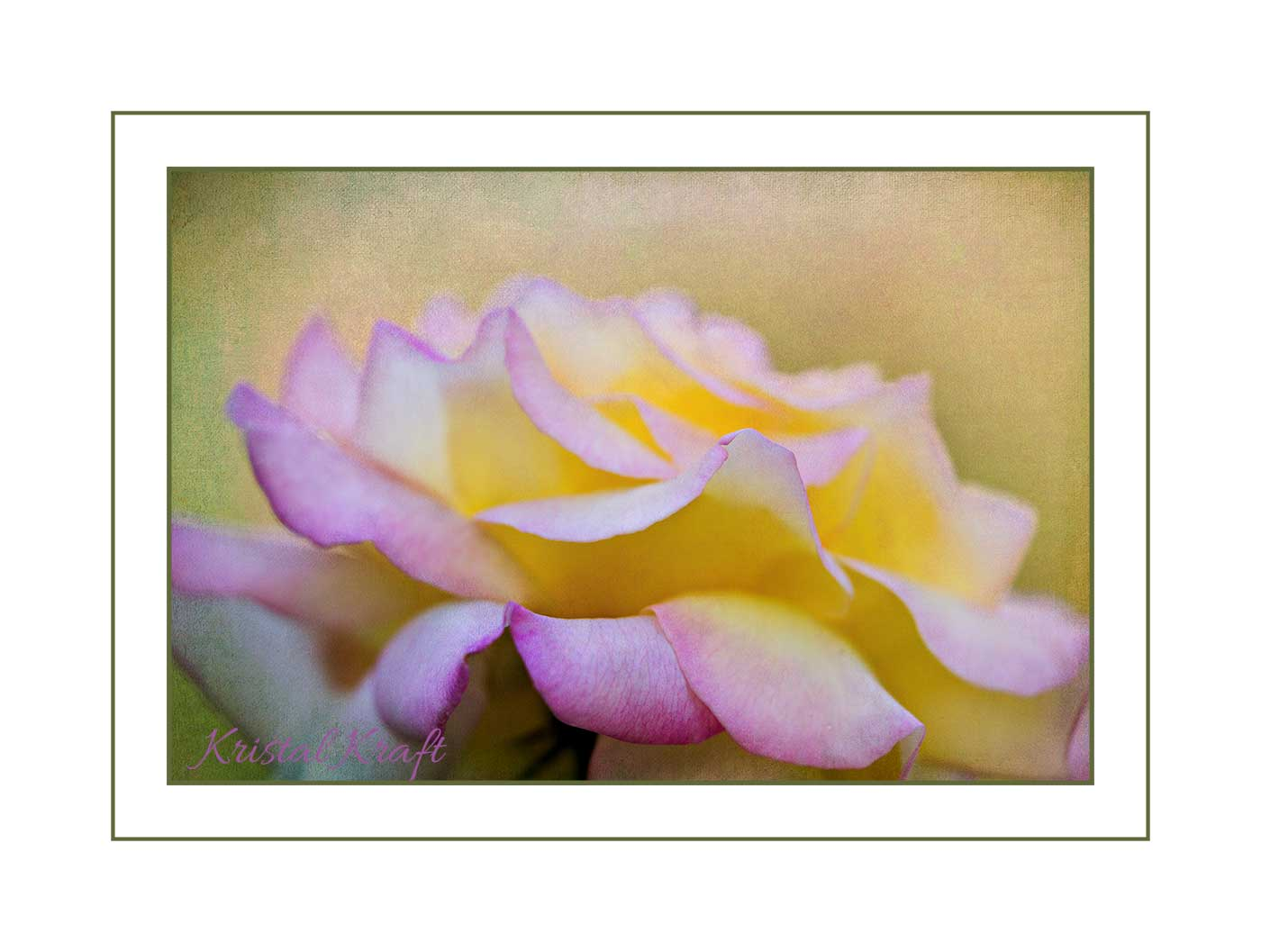 rosegardenrose