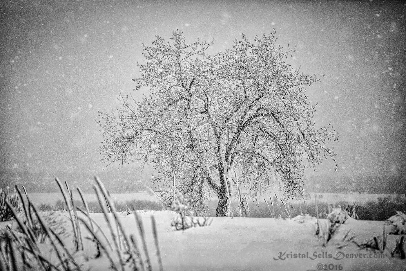 7E9A5742-SnowTree