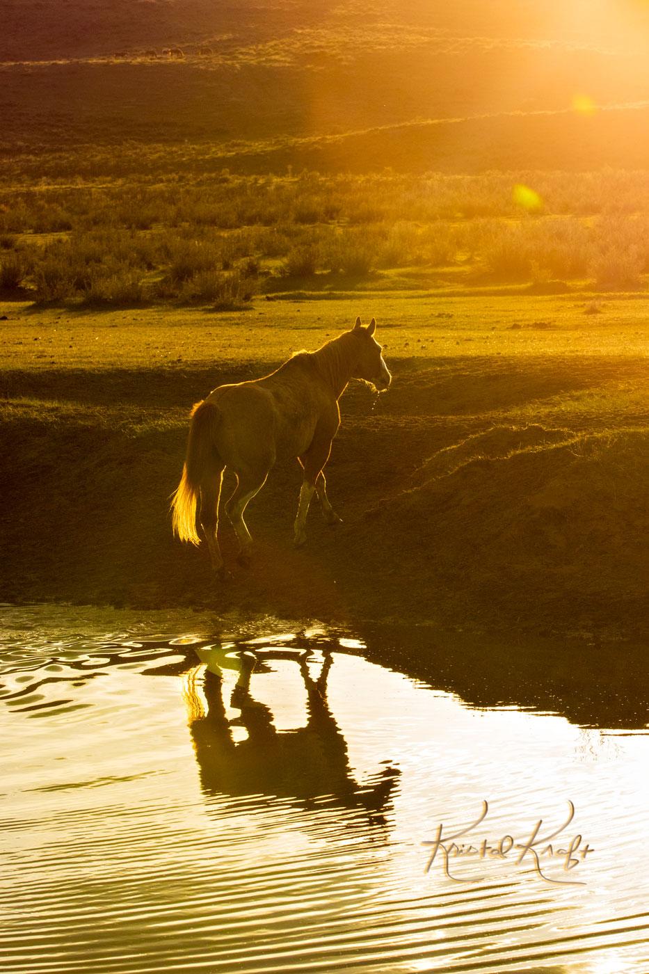 Sunset Horse