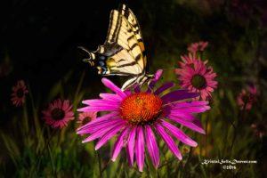 Beauty surrounds us,