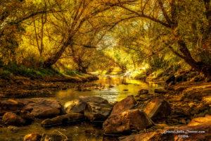 Sunbeam Stream