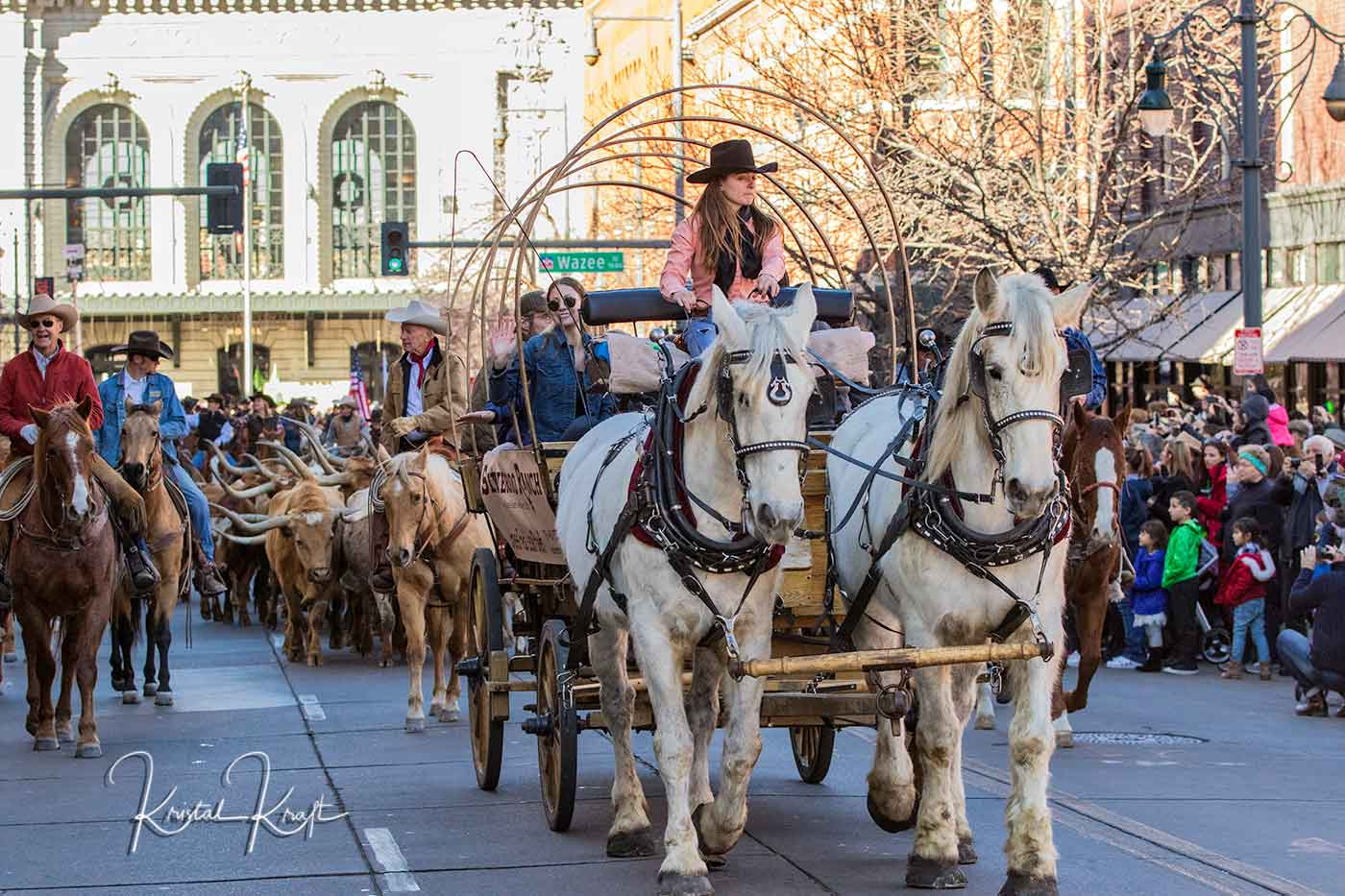 National Western Stock Show Parade begins with horses pulling a wagon and Texas Long Horn steer walking down Denver's 17th Street