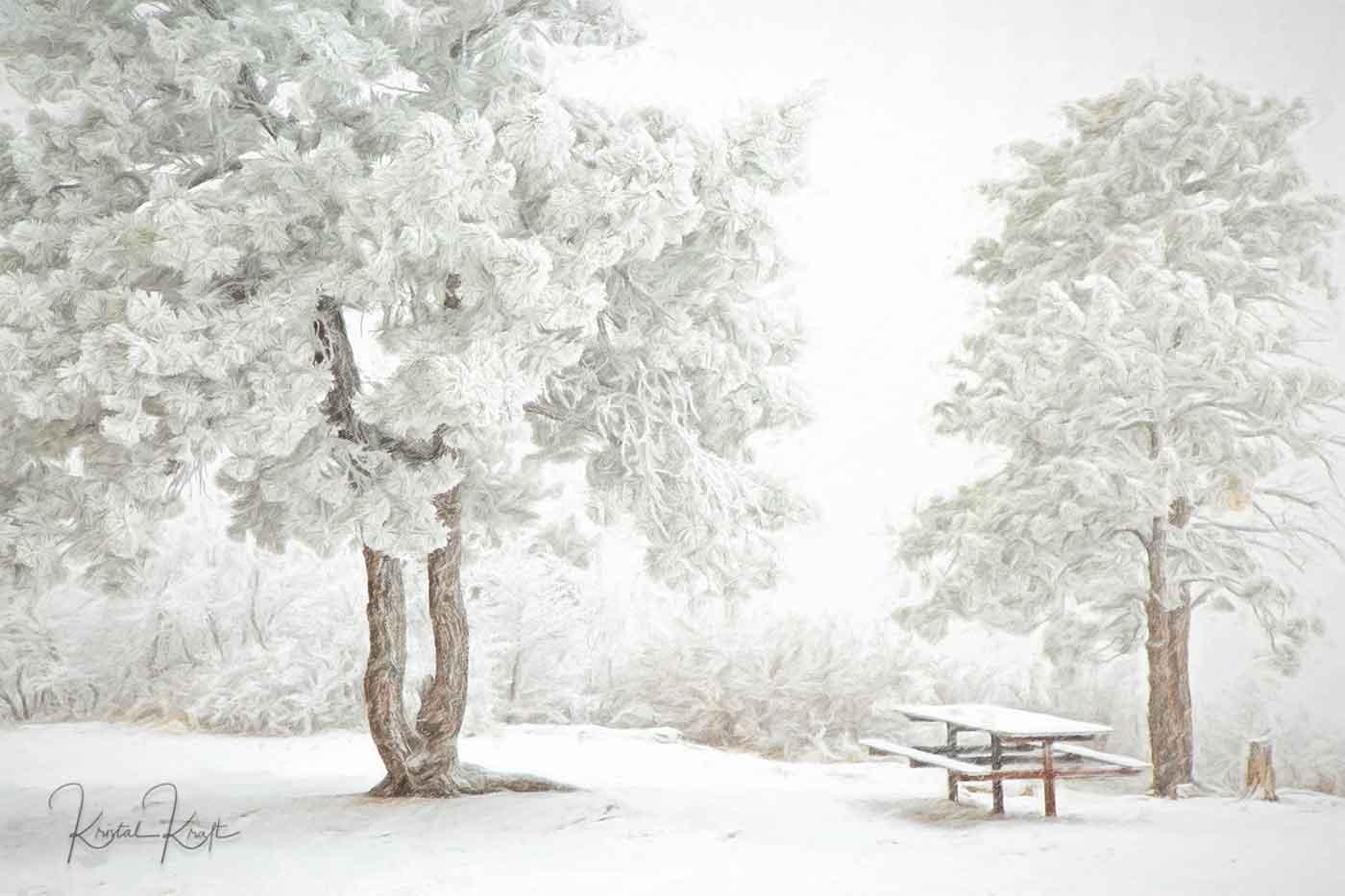 Snow Picnic